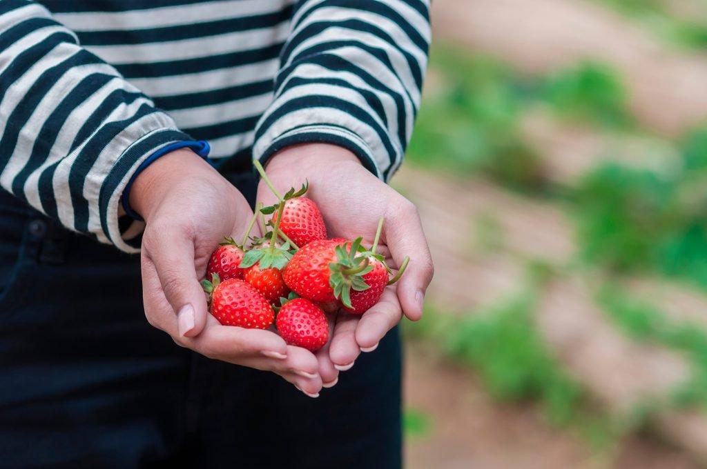 frutas-sazonais-sustentabilidade
