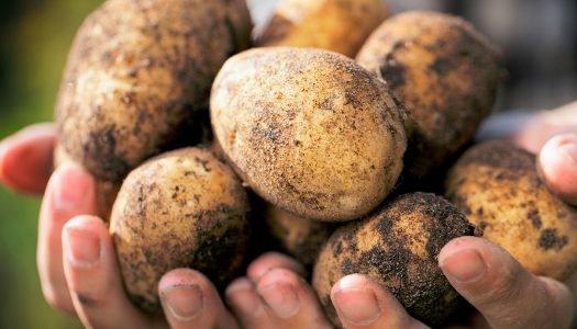 Legumes escovados: você sabe o que é isso?