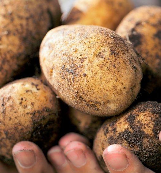 legumes-escovados-1200-628
