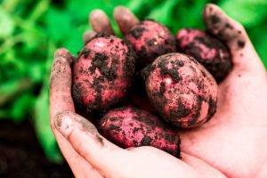 legumes-escovados-economia