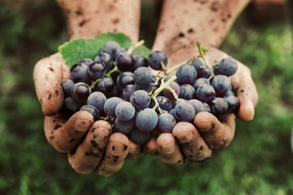 vinho orgânico o que são