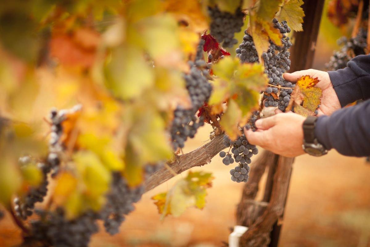 vinhos orgânicos capa