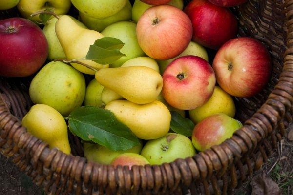 guardar frutas e vegetais - fruteira