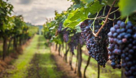 Os melhores destinos brasileiros para tomar um vinho no inverno