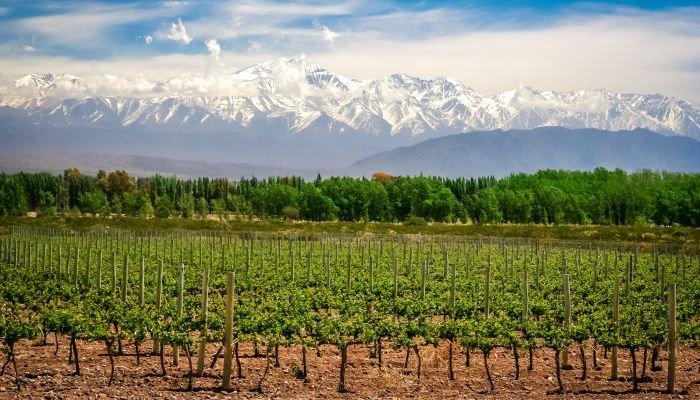 vinhos da américa do sul - argentina