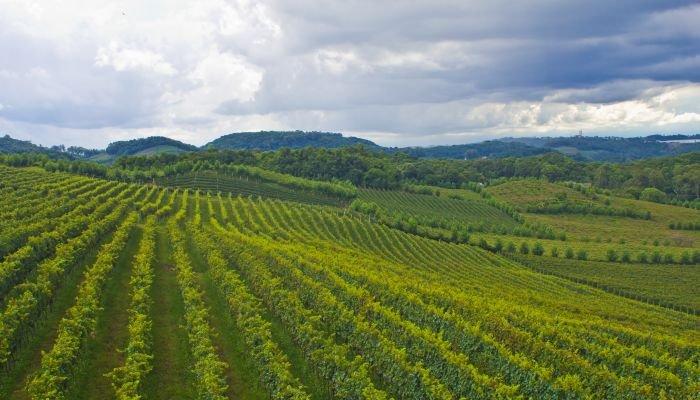 vinhos da américa do sul - brasil