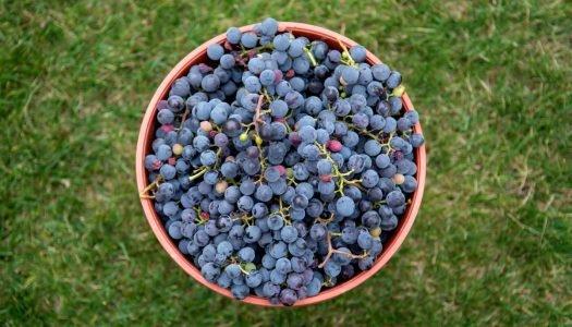 Por que os vinhos da América do Sul fazem tanto sucesso?