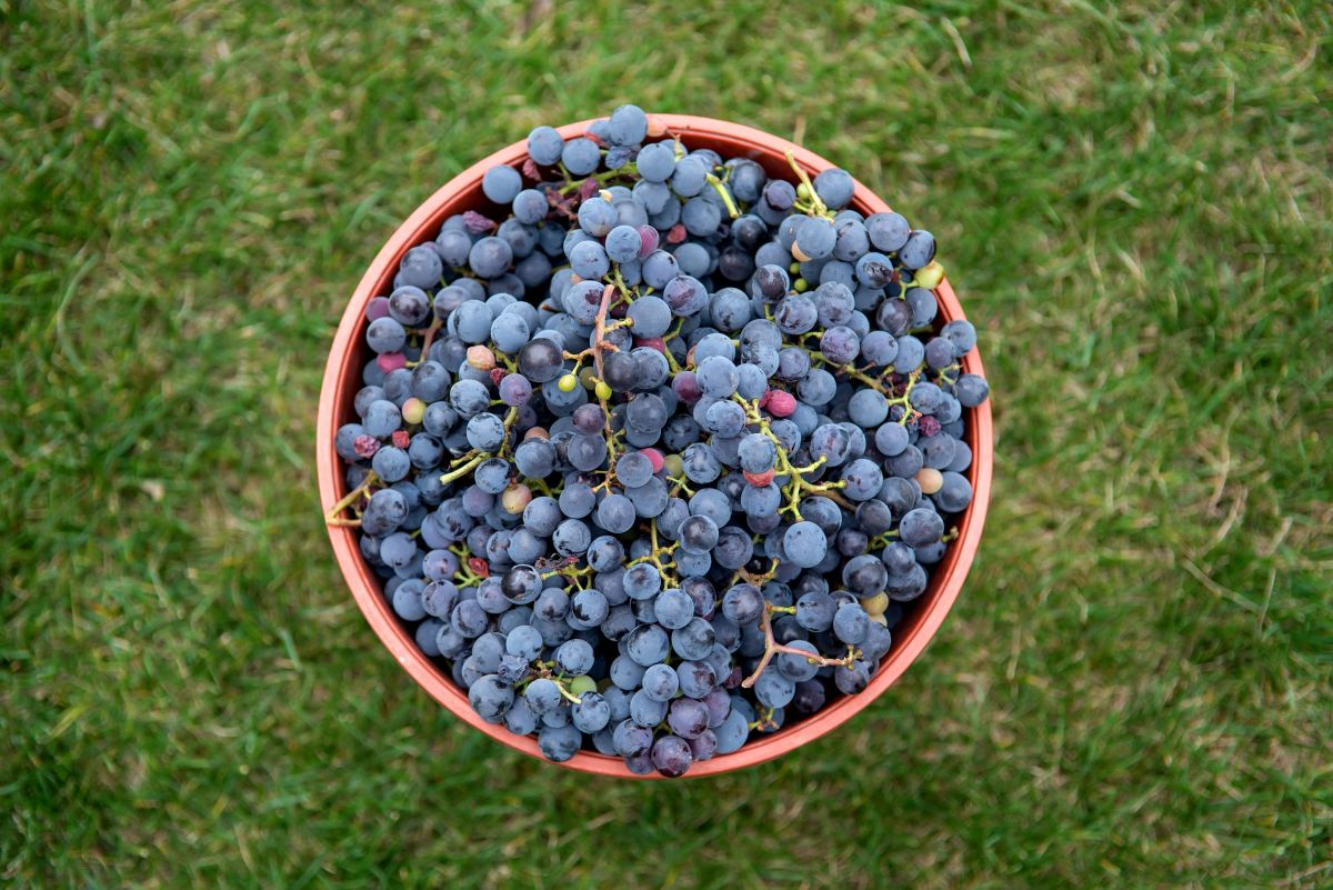 vinhos da américa do sul - capa