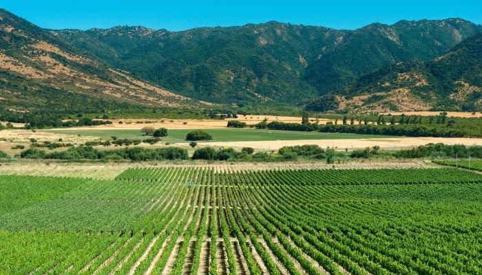 vinhos da américa do sul - chile