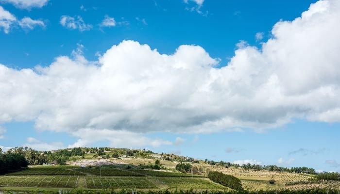 vinhos da américa do sul - uruguai