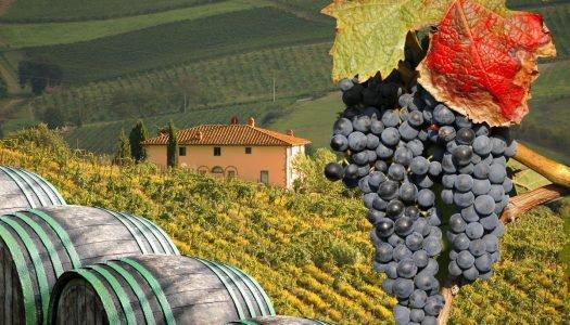Vinhos europeus: conheça suas principais uvas e sabores