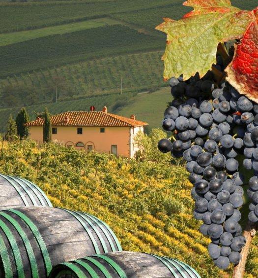 vinhos europeus - capa