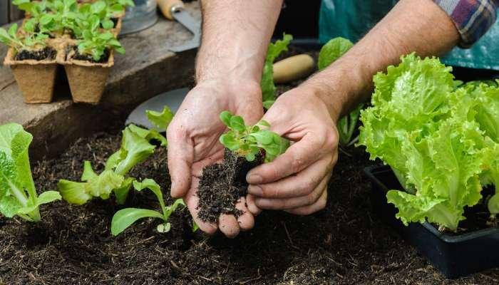 alimentação sustentável