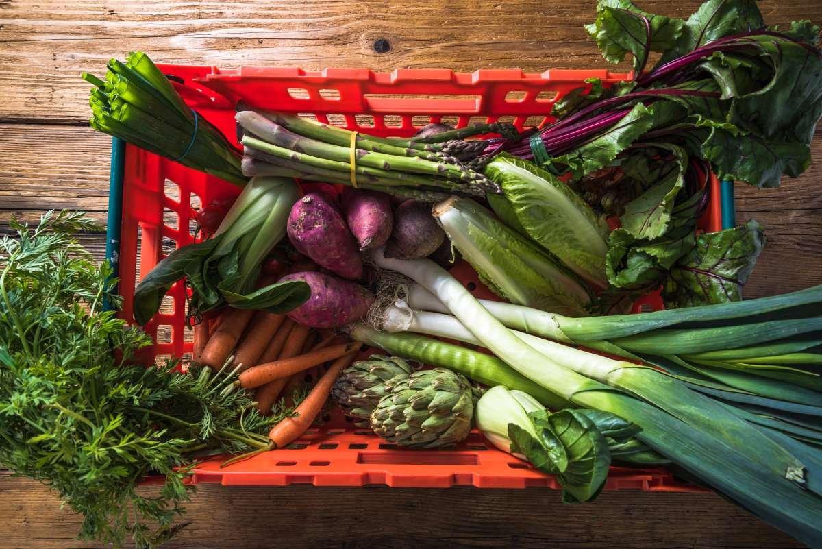 alimentação sustentável - capa