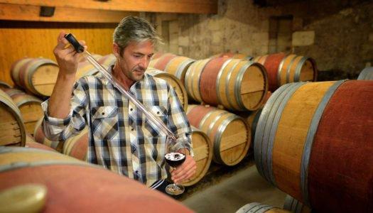 Dia do enólogo: dicas simples para se tornar um expert em vinho
