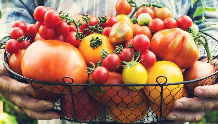 alimentos orgânicos - texto 2