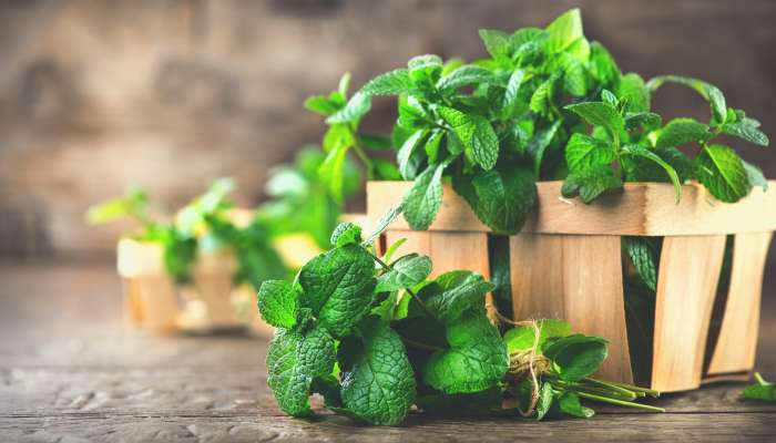 alimentos orgânicos - texto