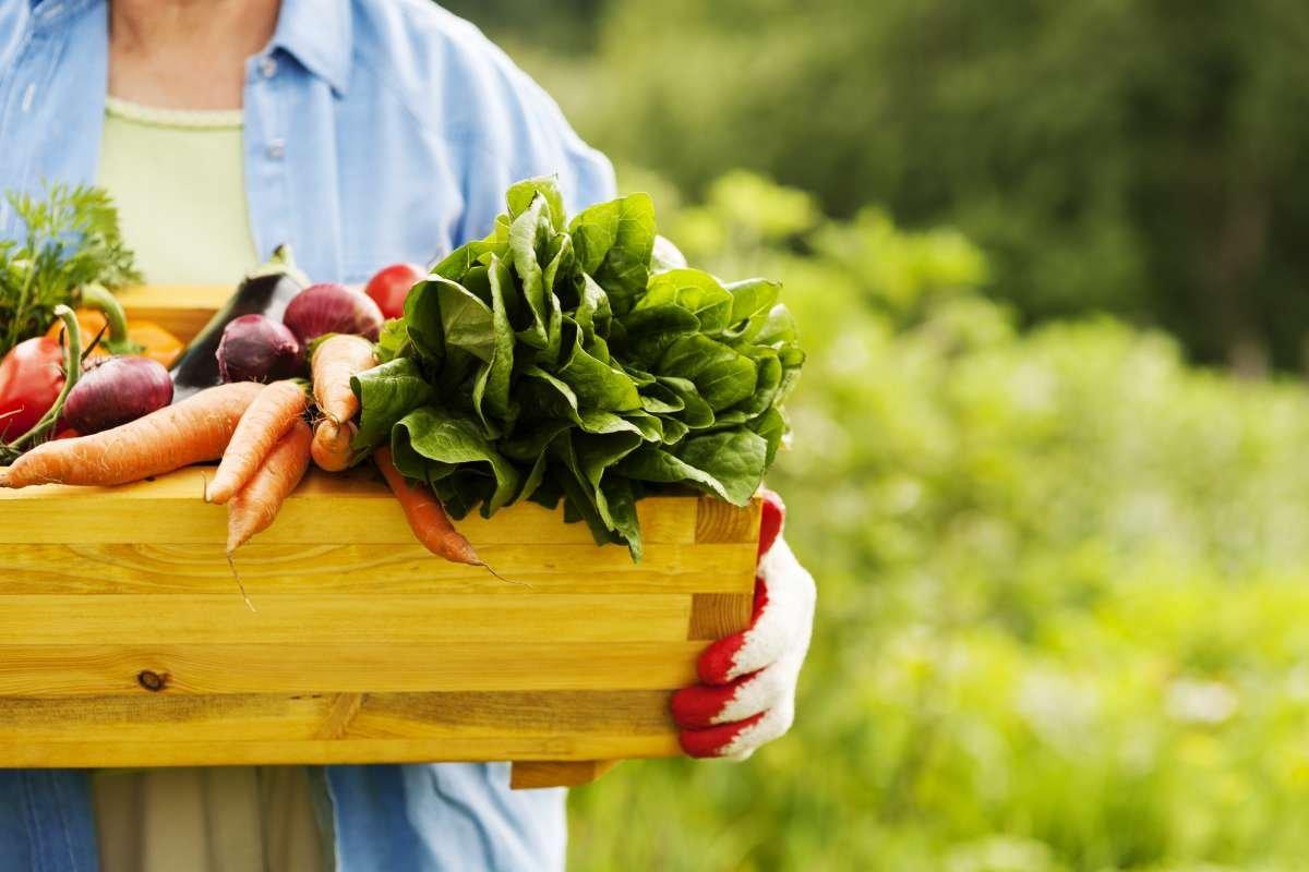 alimentos organicos - capa