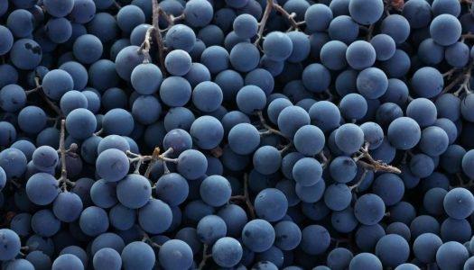 Glossário do vinho: Tudo sobre vinho de A a Z!