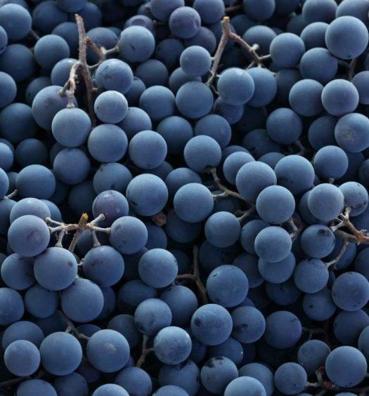 glossário do vinho - capa