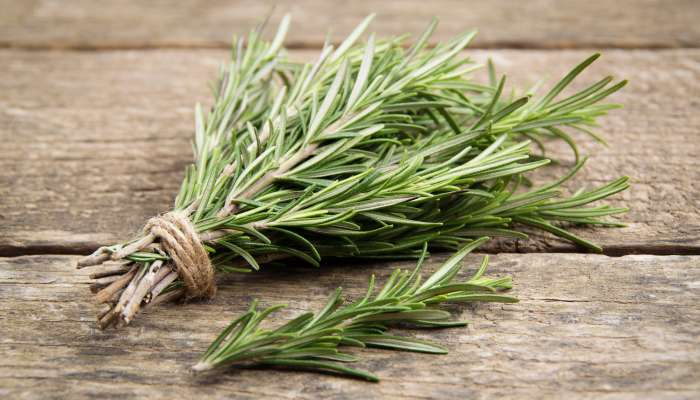 ervas aromáticas - alecrim