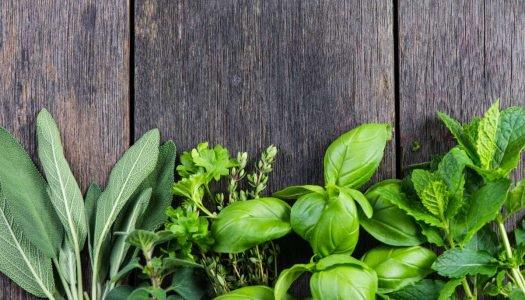 Ervas aromáticas: o que são e quais preciso ter em casa?