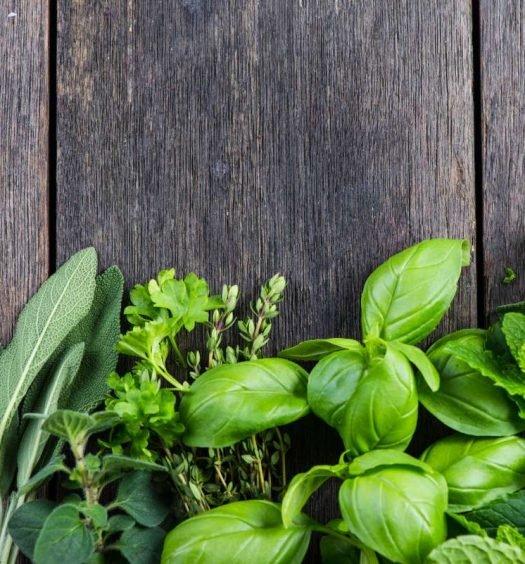 ervas aromáticas - capa