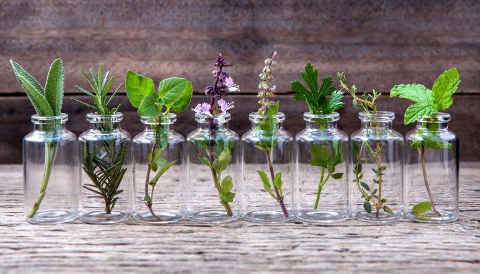ervas aromáticas intro
