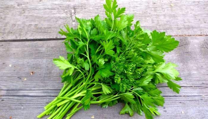 ervas aromáticas - salsa