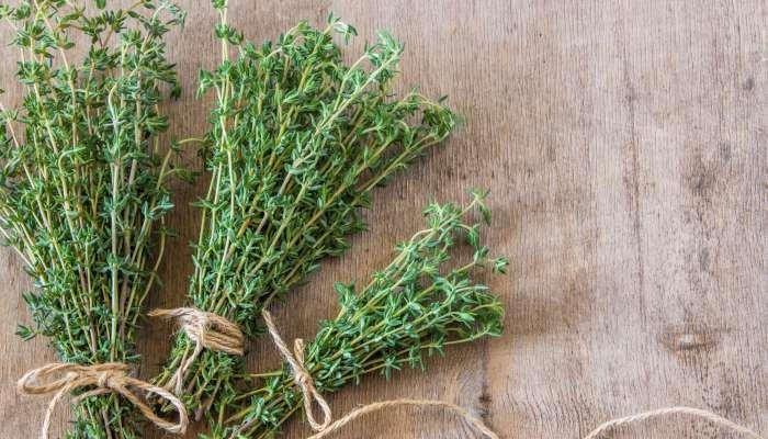 ervas aromáticas - tomilho
