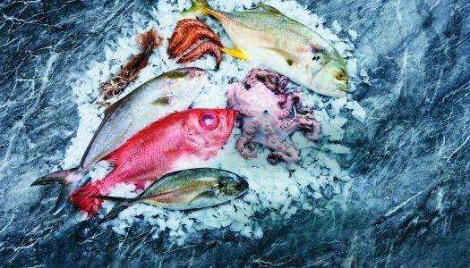 Diferentes tipos de peixes para consumo: conheça novos sabores!