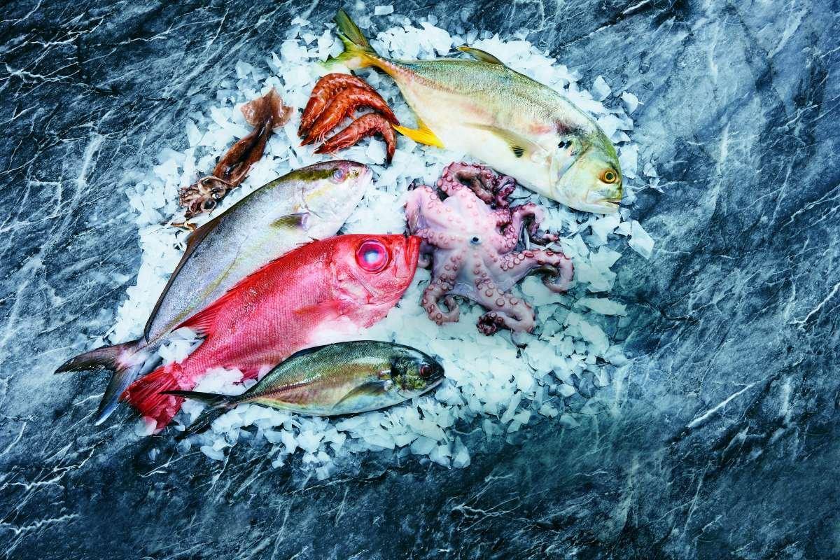 tipos de peixes - capa