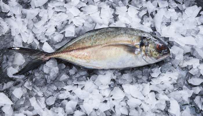 tipos de peixes - carapau
