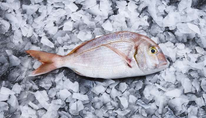 tipos de peixes - pargo rosa
