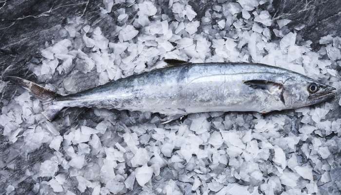 tipos de peixes - sororoca