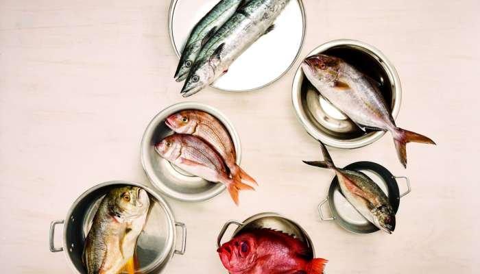 tipos de peixes - texto