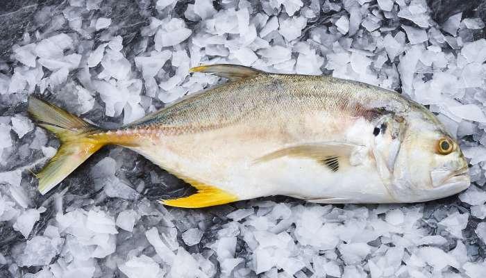 tipos de peixes - xareu