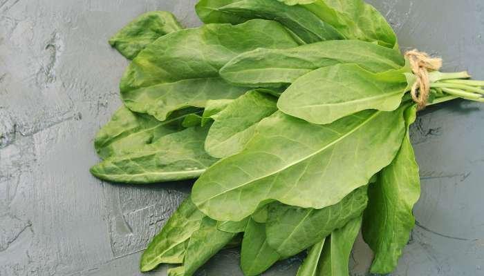 salada verde - almeirão-v