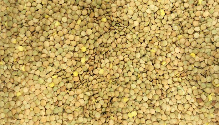 lentilha - proteína vegetal