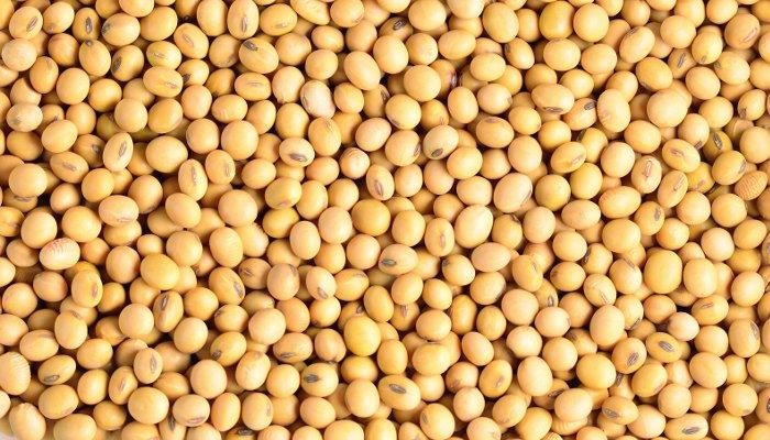 soja - proteína vegetal