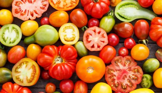 7 curiosidades sobre o tomate
