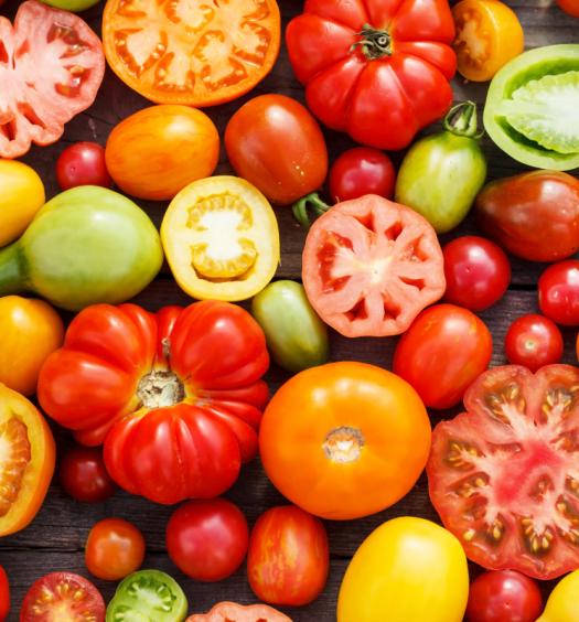 curiosidades sobre o tomate - capa
