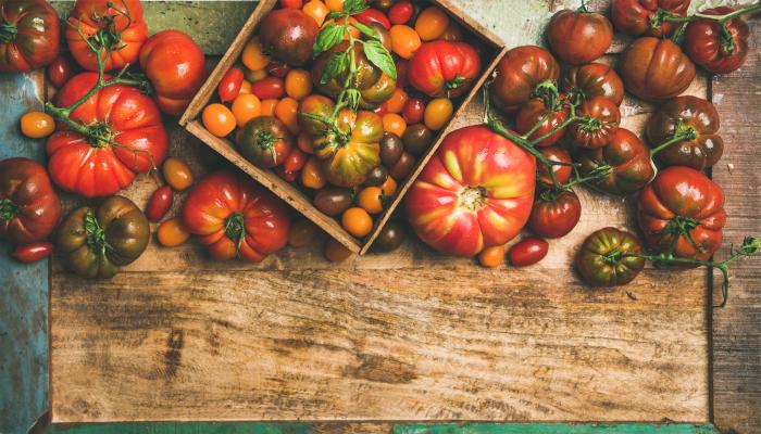 curiosidades sobre o tomate - texto