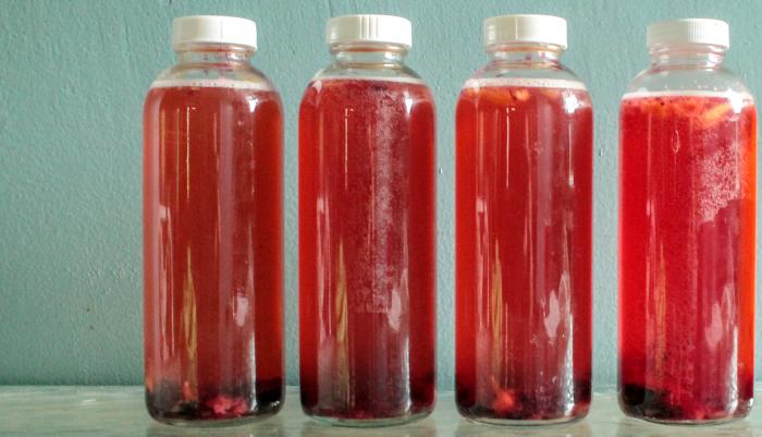 receitas de kombucha - hibisco