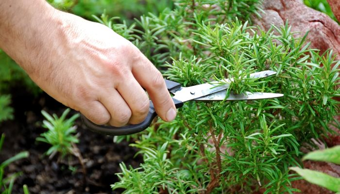 fazer um jardim vertical com temperos tesoura