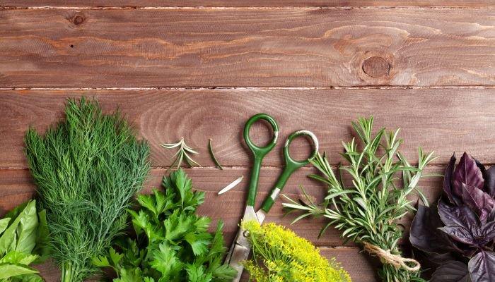 fazer um jardim vertical com temperos muda ou semente