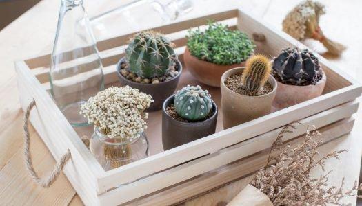 Veja dicas de como fazer uma decoração sustentável para a sua casa
