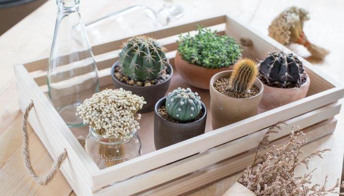 decoração sustentável intro