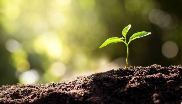 atitudes sustentáveis no dia a dia sustentabilidade