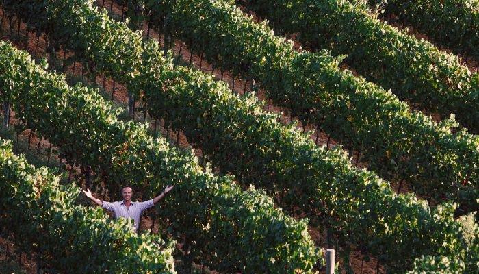 castellani winery plantação